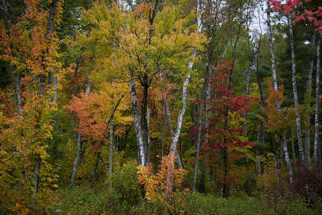 Enjoy the Fall Colors at Chippewa National Forest